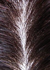 毛の立ち上がりや地肌の自然なウイッグ